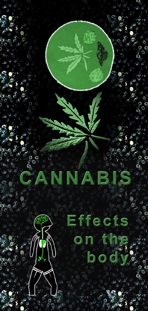 2004 Cannabis effects on the body  - Leaflet